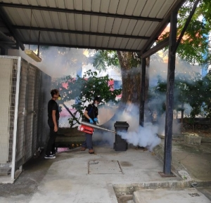 mosquito fogging in backyard